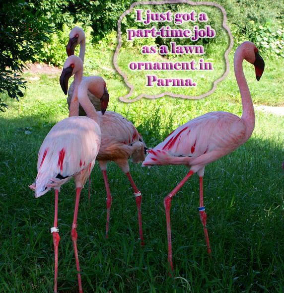 pink flamingo essay jennifer price